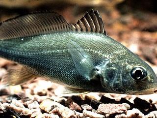 Name:  Fish 9.jpg Views: 70 Size:  33.6 KB