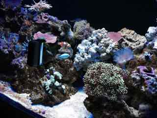 Name:   ImageUploadedByAquarium Advice1446298509.297382.jpg Views: 101 Size:  10.3 KB