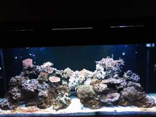 Name:   ImageUploadedByAquarium Advice1446298528.732857.jpg Views: 98 Size:  9.0 KB