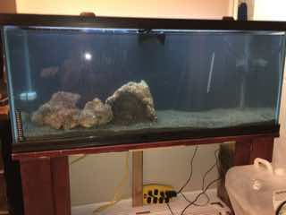 Name:   ImageUploadedByAquarium Advice1447642245.026400.jpg Views: 84 Size:  7.3 KB