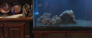 Name:   ImageUploadedByAquarium Advice1447642635.315572.jpg Views: 82 Size:  5.6 KB