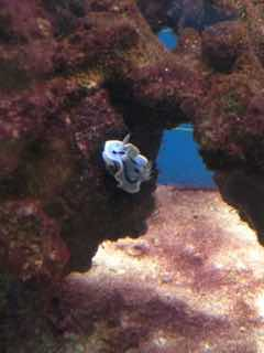 Name:   ImageUploadedByAquarium Advice1456796552.384121.jpg Views: 57 Size:  8.0 KB