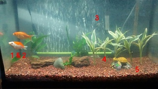 Click image for larger version  Name:fish tank.jpg Views:58 Size:160.9 KB ID:286869