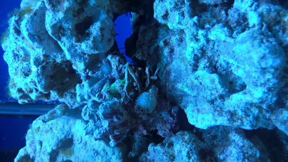 Click image for larger version  Name:green coral.jpg Views:94 Size:256.0 KB ID:288847
