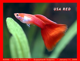 Click image for larger version  Name:usa_red_1c_aa.jpg Views:79 Size:85.8 KB ID:29