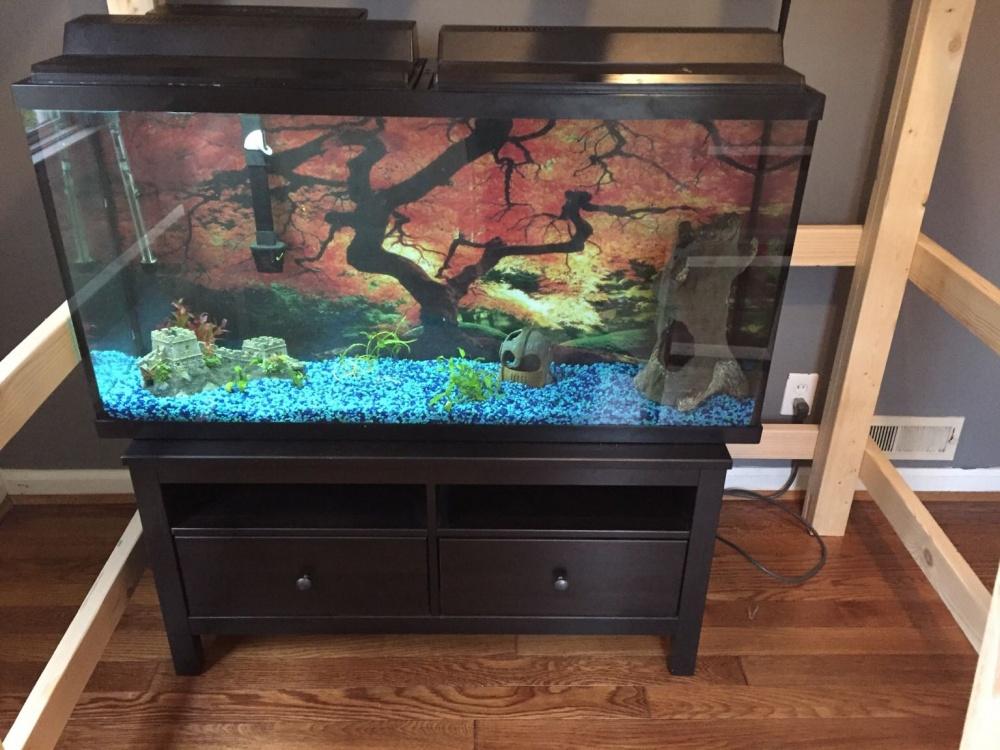 75 gallon stocking ideas aquarium advice aquarium forum community