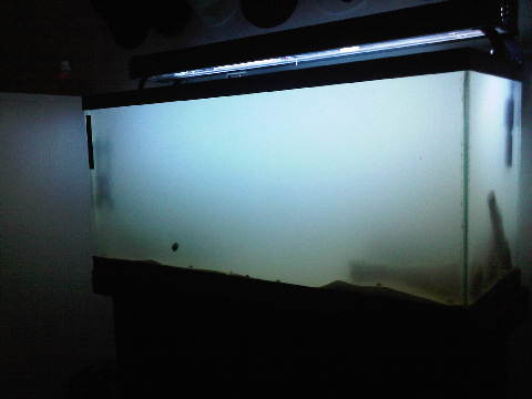 Click image for larger version  Name:34 gallon 003.jpg Views:259 Size:12.7 KB ID:29223