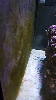 Click image for larger version  Name:Algea glass.jpg Views:77 Size:148.7 KB ID:296653