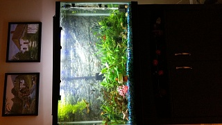 Click image for larger version  Name:fish tank amor.jpg Views:61 Size:189.5 KB ID:304522