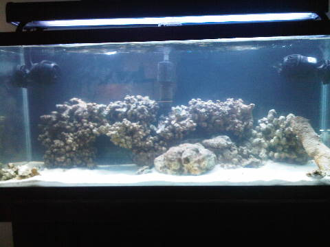 Click image for larger version  Name:34 gallon 031 017.jpg Views:76 Size:22.8 KB ID:30502