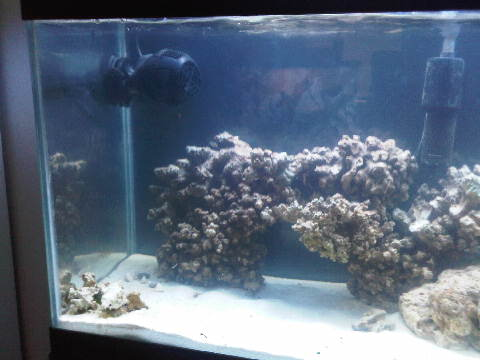 Click image for larger version  Name:34 gallon 031 021.jpg Views:79 Size:24.1 KB ID:30504