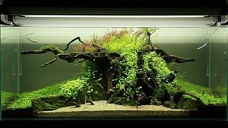 20 Gallon Long Aquascape Journal Aquarium Advice Aquarium Forum Community