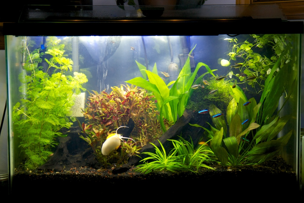 Click image for larger version  Name:aquarium_20131214.jpg Views:28 Size:251.3 KB ID:309551