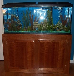 Click image for larger version  Name:aquarium now.jpg Views:47 Size:257.1 KB ID:310414