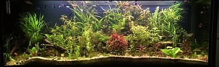 Click image for larger version  Name:Aquarium, Feb 2020.jpg Views:100 Size:158.8 KB ID:315402