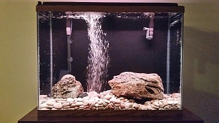 Click image for larger version  Name:37 Gallon.jpg Views:18 Size:191.6 KB ID:315589