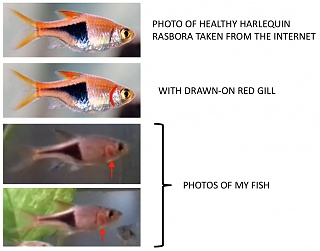 Click image for larger version  Name:fish.jpg Views:5 Size:54.9 KB ID:316790