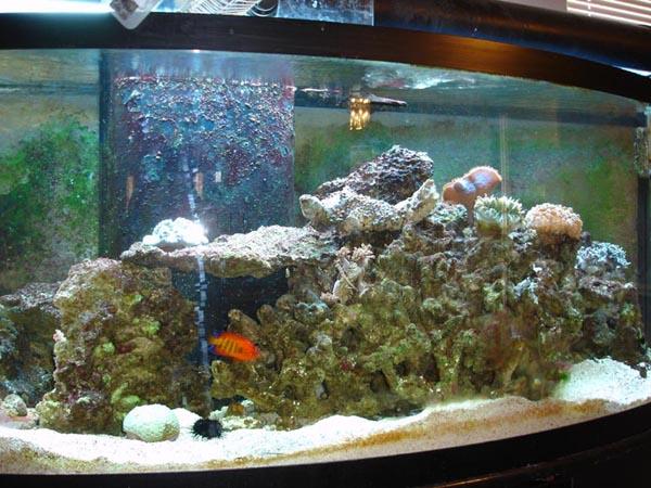 Click image for larger version  Name:aquariumb.jpg Views:80 Size:95.8 KB ID:317