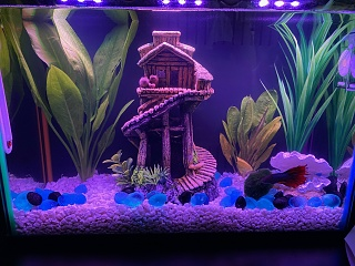 Click image for larger version  Name:Plants in betta tank.jpg Views:14 Size:255.4 KB ID:317698