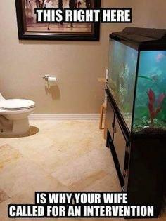 Name:  cca79c14818ed13eb85e2c1bd3670a5b--aquarium-meme.jpg Views: 21 Size:  16.2 KB