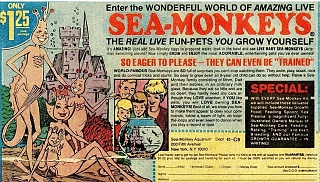 Click image for larger version  Name:Sea Monkeys.jpg Views:22 Size:215.3 KB ID:319929