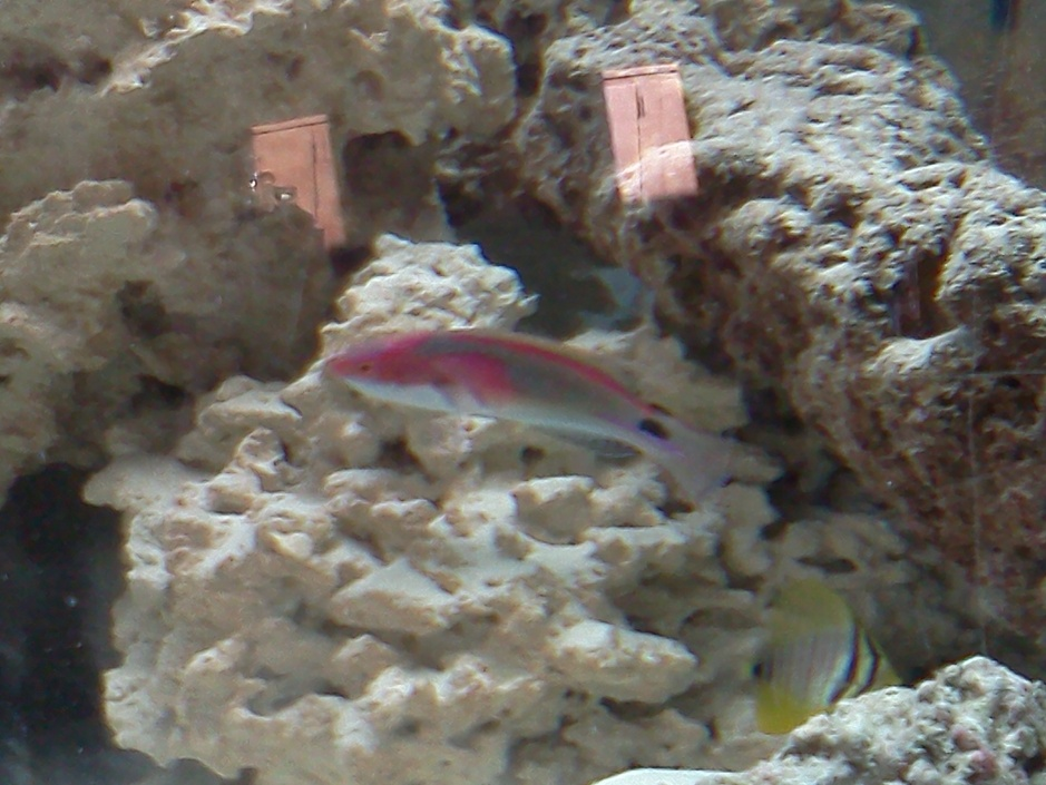 Click image for larger version  Name:wrasse 017.jpg Views:74 Size:206.6 KB ID:33339