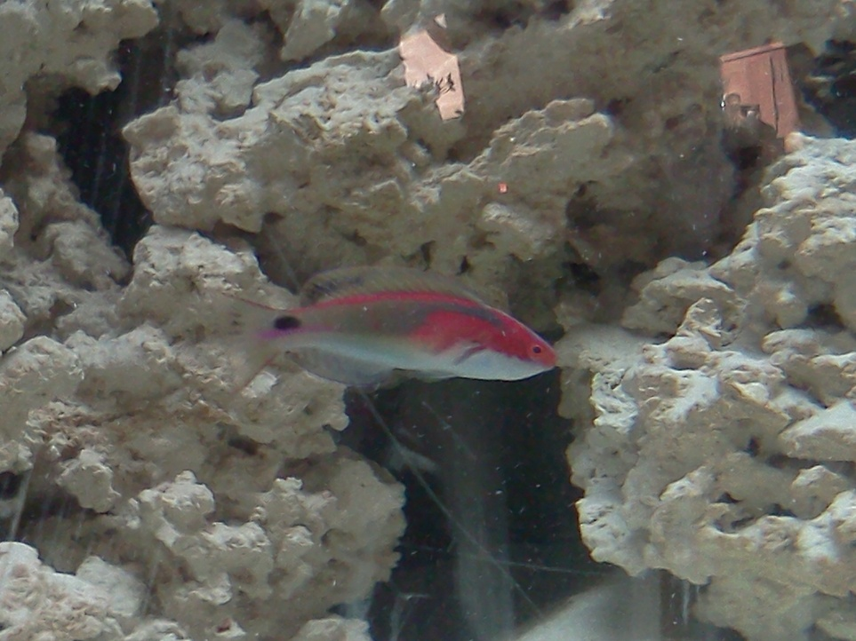 Click image for larger version  Name:wrasse 018.jpg Views:68 Size:204.4 KB ID:33340