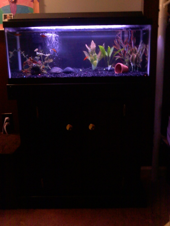 Click image for larger version  Name:Fish tank on new stand.jpg Views:55 Size:89.7 KB ID:34454