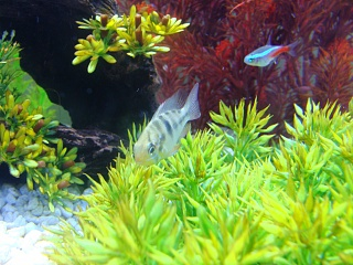 Click image for larger version  Name:GBR 003.jpg Views:64 Size:212.8 KB ID:35461