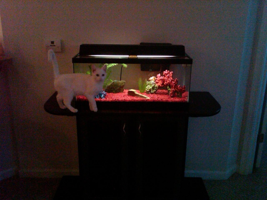 Click image for larger version  Name:tank stand13.jpg Views:73 Size:204.1 KB ID:35873
