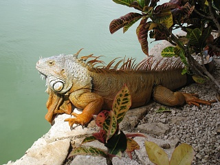 Click image for larger version  Name:mexico 2010 159.jpg Views:79 Size:207.8 KB ID:36690