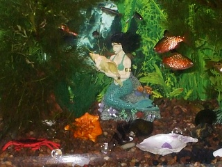Click image for larger version  Name:8x10 new Christmas mermaid, Dec.jpg Views:137 Size:137.8 KB ID:36697