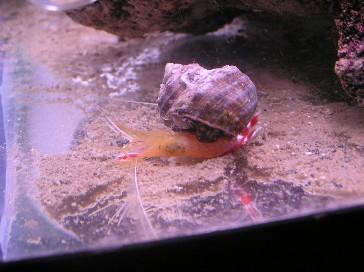 Click image for larger version  Name:shrimp_eating_2.jpg Views:127 Size:34.1 KB ID:367