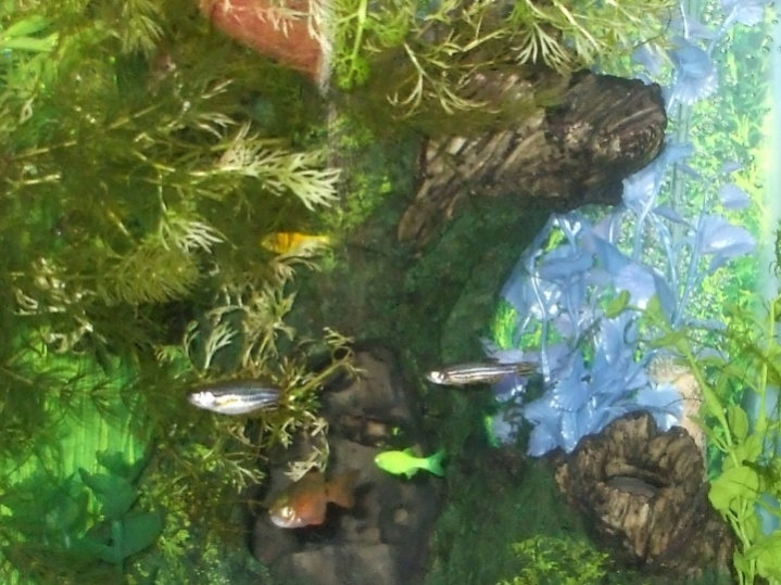 Click image for larger version  Name:8x10 tiny fish, large cave crag, plants, January 2011.jpg Views:108 Size:154.1 KB ID:36711