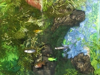 Click image for larger version  Name:8x10 tiny fish, large cave crag, plants, January 2011.jpg Views:118 Size:154.1 KB ID:36711
