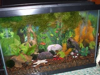 Click image for larger version  Name:full tank shot of rich aquascape, April 2011, orange and green, faux Anubia.jpg Views:109 Size:213.5 KB ID:36784