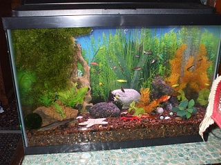 Click image for larger version  Name:April 2011, colorful aquascape, dojo in lower left corner.jpg Views:112 Size:213.7 KB ID:36790