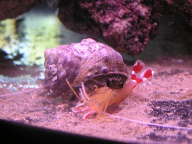 Click image for larger version  Name:shrimp_eating_1.jpg Views:125 Size:37.9 KB ID:368