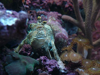 Click image for larger version  Name:crustacean_sheddaq.jpg Views:90 Size:206.2 KB ID:37203