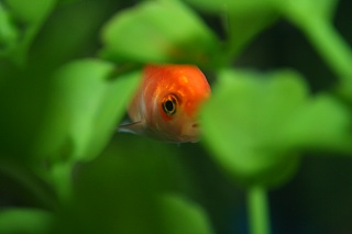 Click image for larger version  Name:Fish 005.jpg Views:97 Size:103.7 KB ID:37291