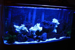 Click image for larger version  Name:Blue Light Tank Shot.jpg Views:177 Size:167.3 KB ID:37816