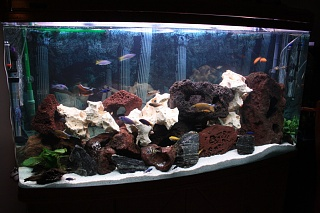 Click image for larger version  Name:White Light no Hutch.jpg Views:186 Size:207.4 KB ID:37817