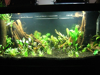 Newly planted 75 gallon angel tank aquarium advice for 75 gallon fish tank dimensions