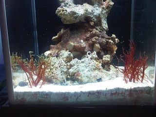 Click image for larger version  Name:fluval 3.jpg Views:346 Size:239.7 KB ID:42163