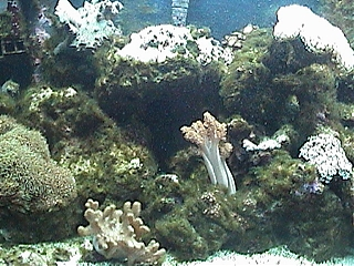 Click image for larger version  Name:fish_tank_1.jpg Views:99 Size:88.6 KB ID:447