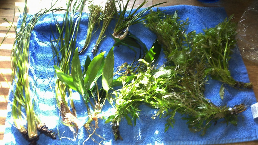 Click image for larger version  Name:newplants.jpg Views:91 Size:255.9 KB ID:45741