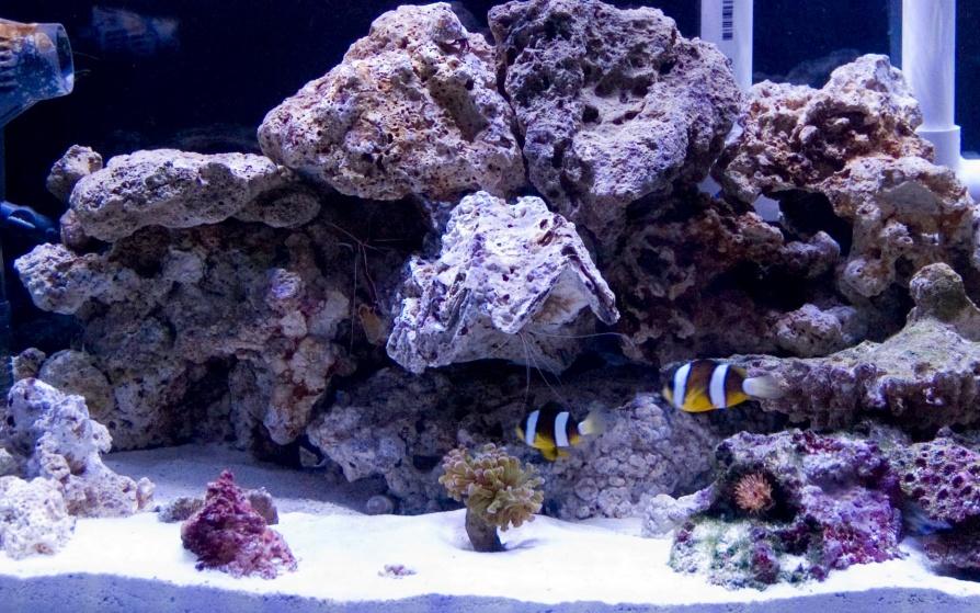 Click image for larger version  Name:fishtank.jpg Views:50 Size:259.6 KB ID:48668