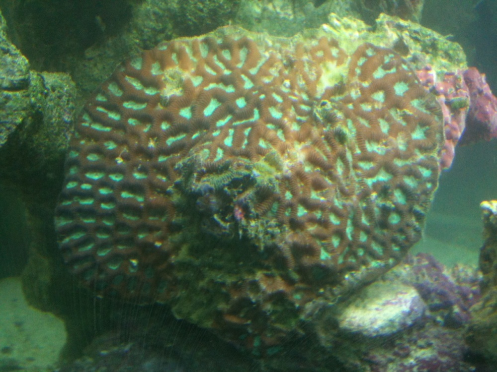Click image for larger version  Name:coral.jpg Views:55 Size:240.9 KB ID:48692