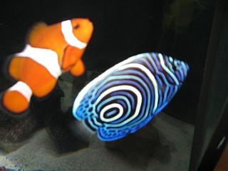 Okay here it is prettiest fish showcase aquarium for Fish store lincoln ne
