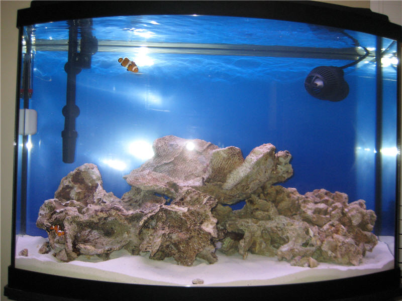 Click image for larger version  Name:aquarium_w_first_fish.jpg Views:78 Size:85.0 KB ID:50956